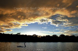 Picture relating to Rathmines - titled 'Rathmines Sunset with Swan. Original exclusive photo art.'