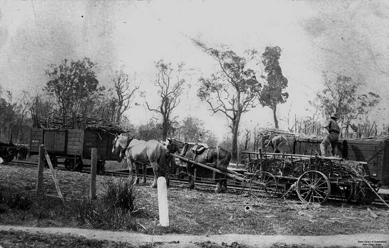 Picture of / about 'Pomona' Queensland - Sugar cane being loaded at Pomona railway yards for Nambour Sugar Mill by McConnell Bros., ca. 1910