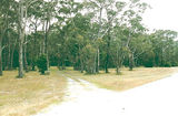 Picture relating to Rennick - titled 'Rennick Plantation; Palpara Park Camp Ground'