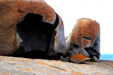 Picture relating to Chichester Range - titled 'Remarkable Rocks ~ Kangaroo Island'