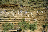 Picture relating to Pandanus Creek Mine - titled 'Pandanus Creek Mine'
