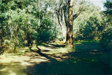 Picture of / about 'Yea River' Victoria - Yea River: old bridge site, Langs Rd