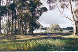 Picture relating to Lake Bolac - titled 'Lake Bolac rest area, Glenelg Hwy'