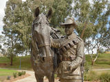 Picture relating to Tamworth - titled 'Waler Horse sculpture 2'