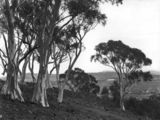 Picture relating to Ainslie - titled 'Old Parliament House from Mt Ainslie framed in trees'