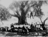 Picture relating to Queensland - titled 'Family picnic around a large tree, 1880-1890'