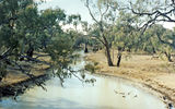 Picture relating to Boomi River - titled 'Boomi River ana branch'
