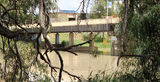 Picture relating to Wentworth - titled 'Darling River Bridge Wentworth'