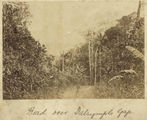 Picture relating to Ingham - titled 'Road through the pass at Dalrymple Gap, near Ingham, ca. 1881'