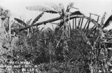 Picture relating to Buderim - titled 'Water wheel on a banana plantation, Buderim, ca.1920'