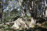 Picture of / about 'Mount Mackenzie' New South Wales - Mount Mackenzie vegetation