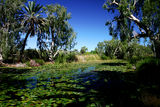 Picture relating to Millstream-Chichester National Park - titled 'Millstream-Chichester National Park'