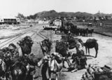 Picture of / about 'Duchess' Queensland - Team of camels at the Railway Station in Duchess, ca.1910