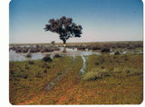 Picture relating to Uteara - titled 'Uteara - Lake in flood South of Homestead'