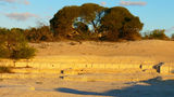 Picture of / about 'Hamelin Pool' Western Australia - Hamelin Pool