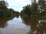 Picture relating to Lachlan River - titled 'Lachlan River at Cowra'