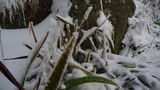 Picture relating to Mount Gingera - titled 'Mount Gingera - grass covered in snow and frost crystals'