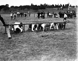 Picture relating to Acton - titled 'Obstacle race at School Sports Day at Acton Sports Ground'