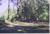 Picture of / about 'Toolangi' Victoria - Toolangi Football & Camp Reserve