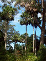 Picture relating to Cabbage Tree Creek - titled 'Cabbage Tree Creek'