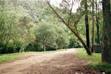 Picture of / about 'Jamieson River' Victoria - Jamieson River; Grannys Flat camp ground