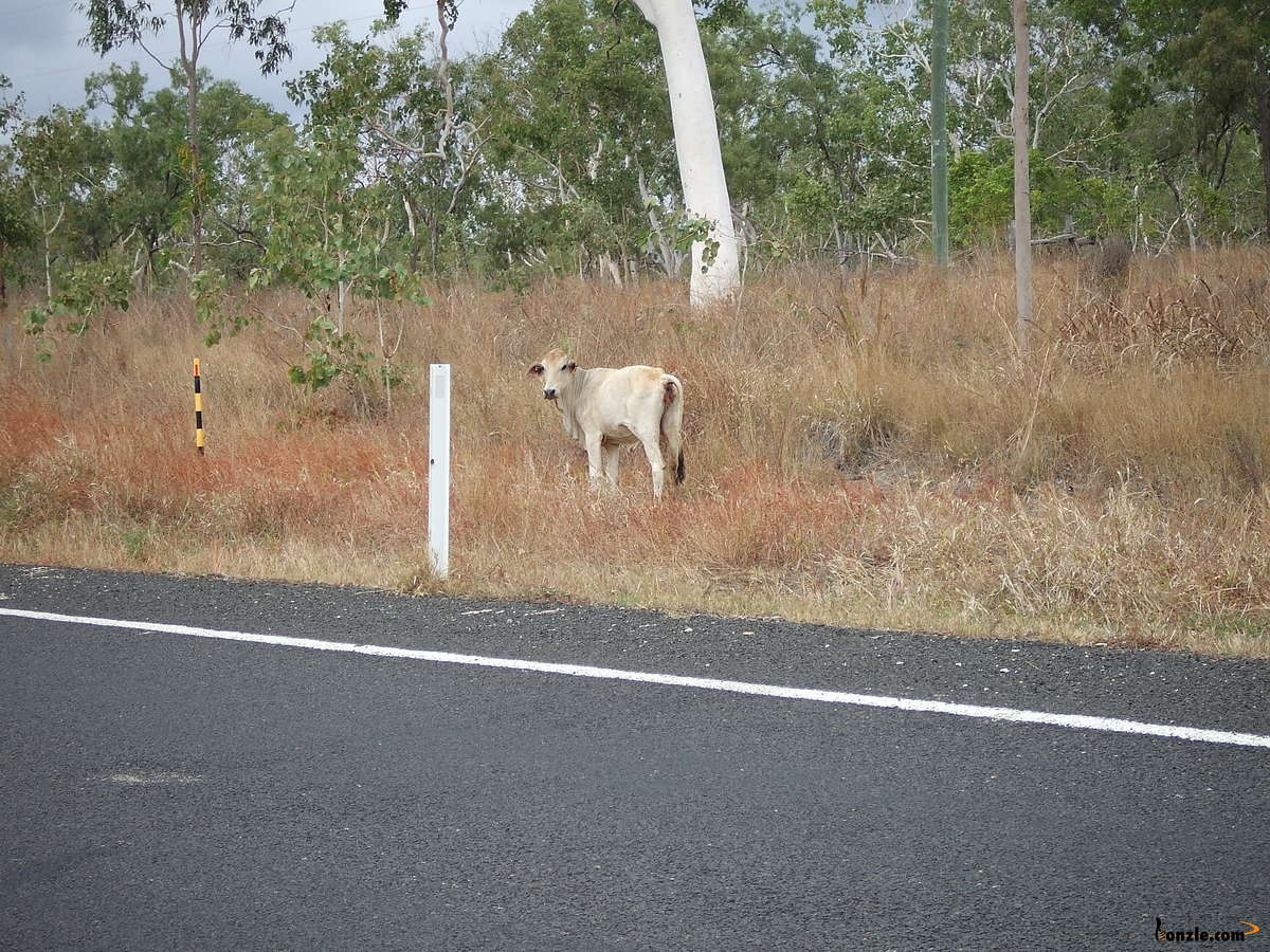 Picture of / about 'Cooktown Developmental Road' Queensland - Cooktown Developmental Road