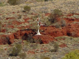 Picture relating to Newman - titled 'Pilbara icon'