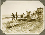 Picture relating to Bundaberg - titled 'People crowd the beach to see the turtles, Bundaberg, ca. 1930'