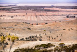 Picture of / about 'Cleve' South Australia - Cleve Landscape
