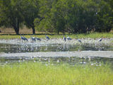 Picture of / about 'Burrguk' Western Australia - Local wetlands