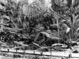 Picture of / about 'Brisbane' Queensland - Fern Island in the Botanic Gardens, Brisbane, Queensland, ca. 1878