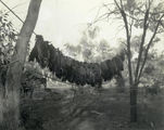 Picture relating to Dillalah - titled 'Last day's bag, Governor's hunt, Dillalah, August 1907'
