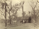 Picture relating to Laidley - titled 'Settlers bark hut on Laidley Creek'