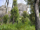 Picture relating to Porongurup National Park - titled 'Very lage Granite Bolders '