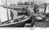 Picture of / about 'Wynnum' Queensland - Fishing boats at Wynnum, 1907