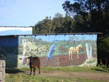 Picture of / about 'Acacia Creek' New South Wales - Acacia Creek