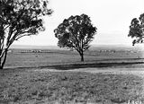 Picture relating to Capital Hill - titled 'View of Hotel Kurrajong, Kingston Power Station and Eastlake from Capital Hill.'