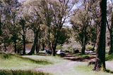 Picture relating to Seven Creeks - titled 'Seven Creeks: Polly McQuinnes camp reserve'