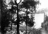 Picture relating to Cotter Dam - titled 'Cotter Dam wall and stilling pond - River Oak trees in front'
