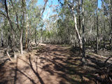 Picture relating to The Rock Nature Reserve - titled 'Start of the walking track to Rock Hill'