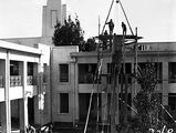 Picture of / about 'Parliament House' the Australian Capital Territory - Pot plants being hoisted on to the roof of Old Parliament House