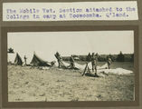 Picture relating to Toowoomba - titled 'Mobile Veterinary Section attached to Gatton College, setting up camp at Toowoomba'