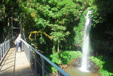 Picture of / about 'Dorrigo National Park' New South Wales - Dorrigo National Park