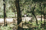 Picture relating to Wellington River - titled 'Wellington River, Alpine National Park; Paradalote bush camp'