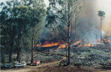 Picture relating to Marysville - titled 'Farm Spur, Blue Range, Slash burn'