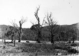 Picture relating to Mount Coree - titled 'Unidentified lansdcape, Forestry Camp Mount Coree.'