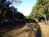 Picture relating to Mount David - titled 'Mount David - forestry road'