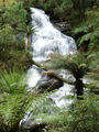 Picture relating to Young Creek - titled 'Triplet Falls'
