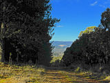 Picture of / about 'Lidsdale State Forest' New South Wales - Lidsdale State Forest