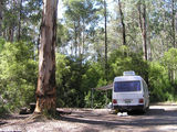 Picture relating to Bunyip State Park - titled 'Bunyip State Park: Rysons Cr camp ground'